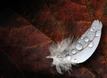 feather-on-autumn-leave-kees-bastmeijer