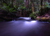 Kees-Tasmanië-2019-6180-iii-small
