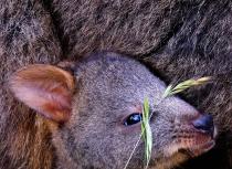 Tasmanië-2019-Kees-Bastmeijer6970-small