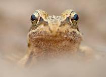 frog-campina-kees-bastmeijer