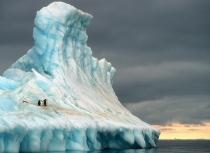 antarctica-adelie-penguins-kees-bastmeijer