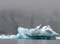 Spitsbergen - Kees Bastmeijer 2015 (1295)-ii-klein