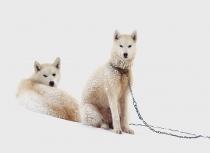 Kulusuk Huskies Groenland - Kees Bastmeijer (0009)-ii-klein